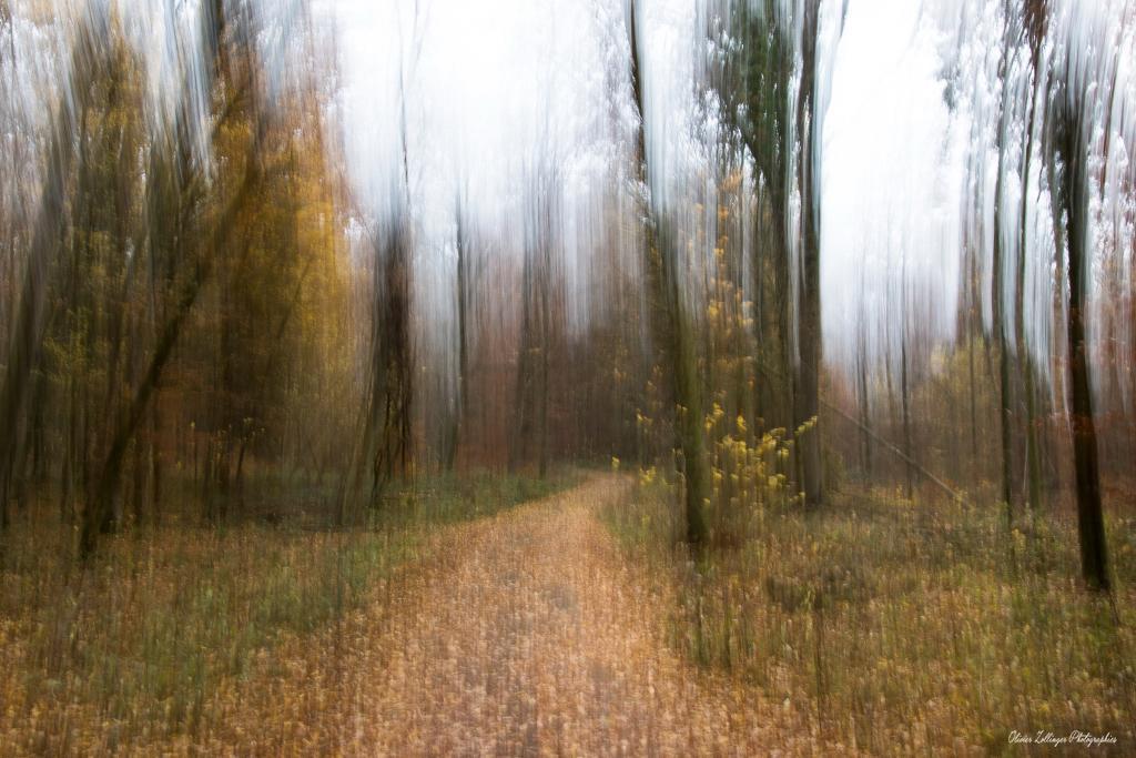 La forêt mystérieuse novembre 2018